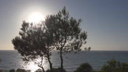 Stock Video Footage of View of Sun behind a Fir Tree Foliage on Sea, Sunset Landscape on Coastline