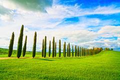 Tuscany, farmland, cypress trees row and field. siena, val d orcia Stock Photos