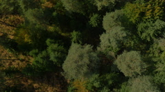 AERIAL: Flying over tall autumn trees in a forest Stock Footage