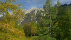 AERAL: Colorful larches on mountaintop in fall Stock Footage