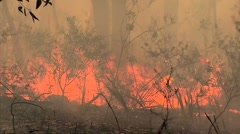 Bush fire burning Stock Footage