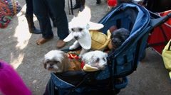 Scenes from The 24th Annual Tompkins Square Halloween Dog Parade Stock Footage