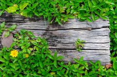 Wood with green grass border, natural frame. Stock Photos