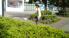 Urban green belts, workers in pruning branches Stock Footage