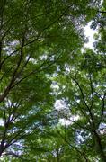 Under the shade of a tree Stock Photos