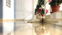 "Stock Video Footage of Cat in ""christmass"" office timelapse"