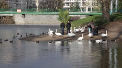 People feeding swans and ducks Stock Footage