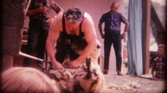 1271 professional sheep shearing at county fair - vintage film home movie - stock footage