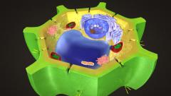 Stock Video Footage of Plant cell