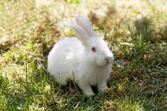 White bunny in green grass in the garden Stock Photos