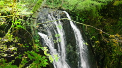 Slow motion of forest waterfall, green vegetation and water falling Stock Footage