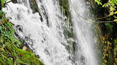 Slow motion detail of forest waterfall, green vegetation and water falling Stock Footage