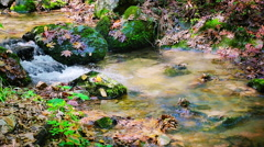 Slow motion of forest stream running over mossy rocks Stock Footage