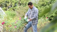 Man in botanic garden cutting roses Stock Footage