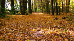 Autumn leaf fall in calm weather Stock Footage
