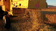 Agriculture combine harvester. wheat, rice, rye harvest. back view of agricul Stock Footage