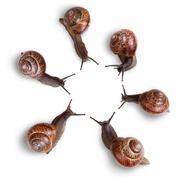 Curious snails Stock Photos