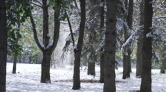 Snow falling down from trees in slow motion effect Stock Footage