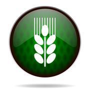 Stock Illustration of grain green internet icon.
