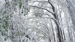 Snow fall from tree in slow motion.Winter landscape Stock Footage