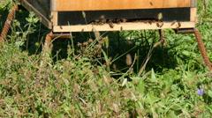 Stock Video Footage of 4K UHD western honey bees(apis)  flying around wooden beehive
