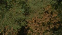 AERIAL: Colorful autumn forest in bidr's perspective Stock Footage