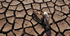 Dry Lake Famine from Global Warming Climate Change Skull Death 4K - stock footage