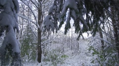 Winter landscape in forest-slow motion panoramic view Stock Footage