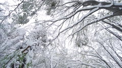 Winter lanscape with snowy trees Stock Footage