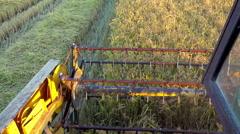 4k harvesting combine shearers. top view of harvester cropping rice, wheat, Stock Footage