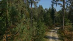 AERIAL: Autumn pine tree forest Stock Footage