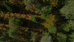 AERIAL: Autumn forest in bird's perspective Stock Footage