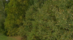 AERIAL: Electric lines behind autumn forest Stock Footage