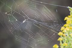 Spider web attached Stock Photos
