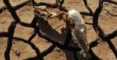 Dry Lake Famine from Global Warming Climate Change Skull Death Pan 4K Stock Footage