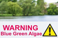 Algae warning Stock Photos