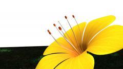 Self fertilization in flowering plant Stock Footage