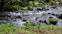 Little river in a Black Forest - Germany Stock Footage