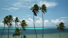 Palm trees against the blue ocean Stock Footage