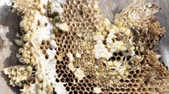 Poisoned by pesticides wasps and larvae slowly dying Stock Footage