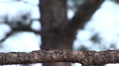 Black-capped Chickadee Fall Stock Footage