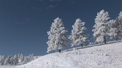 Prairie Custer State Park Winter Snow Stock Footage
