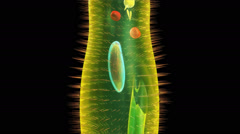 Paramecium Stock Footage