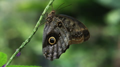 Butterfly on the branch of a flowering plant Stock Footage