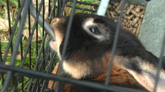 Bunny drinking water Stock Footage