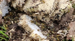 Destroyed wasp nest Stock Footage