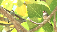 Cute Little Islands Birds 1 - stock footage