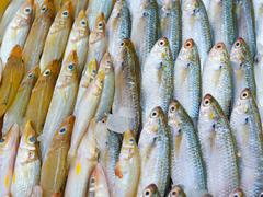 fresh fish for sale - stock photo