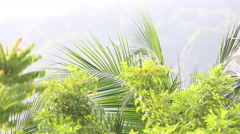 Green branches in tropics Stock Footage