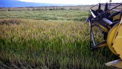 Combine blades harvesting wheat, rice, rye, sony 4k steadycam shoot Stock Footage